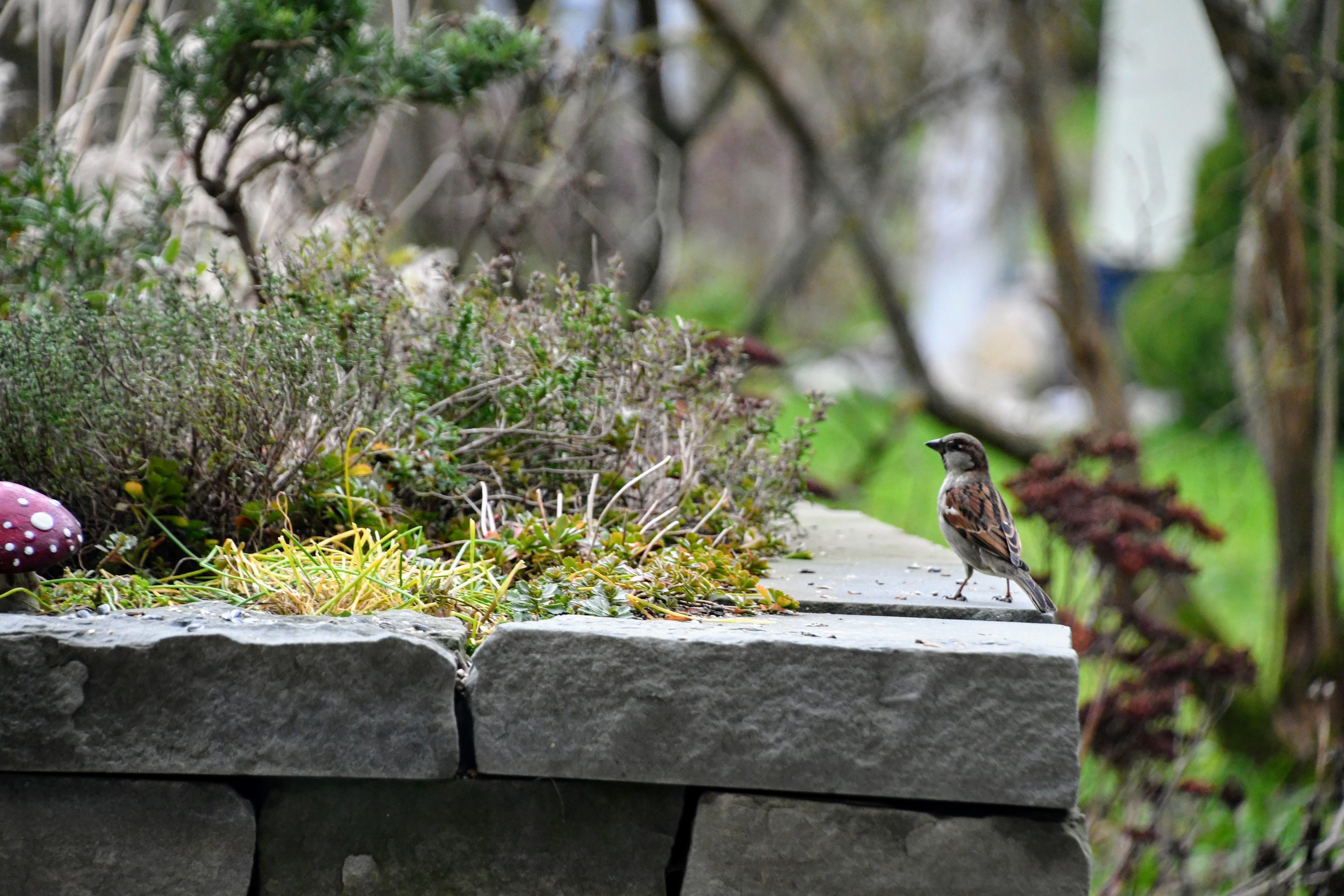 sparrows-15.12-1