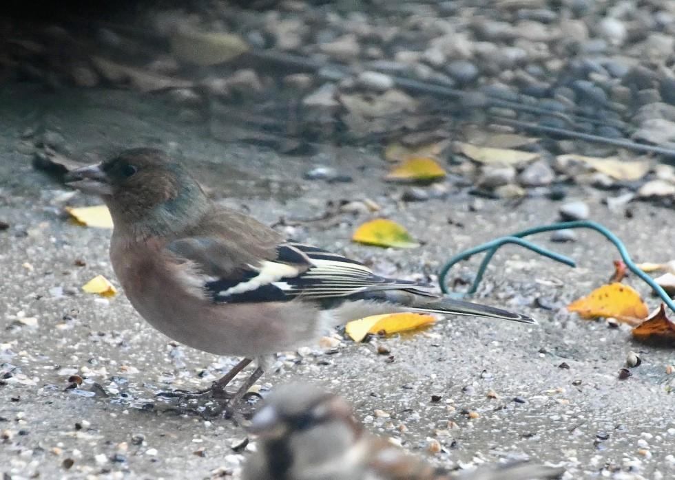 sparrows-28.12-6