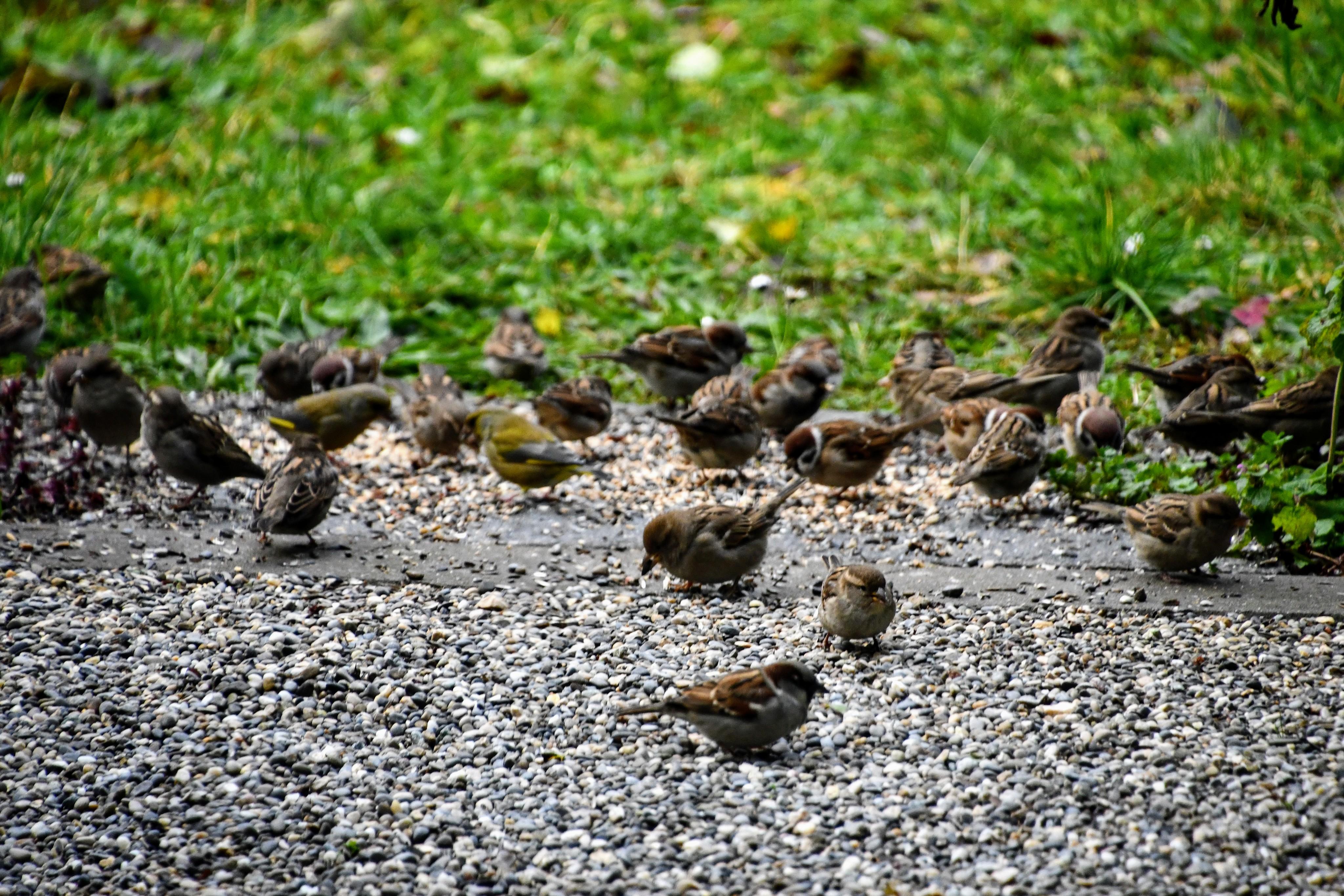 sparrows-30.11-1