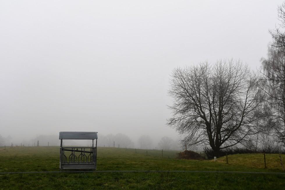 25.01.2020-feldbrunnen-south-27