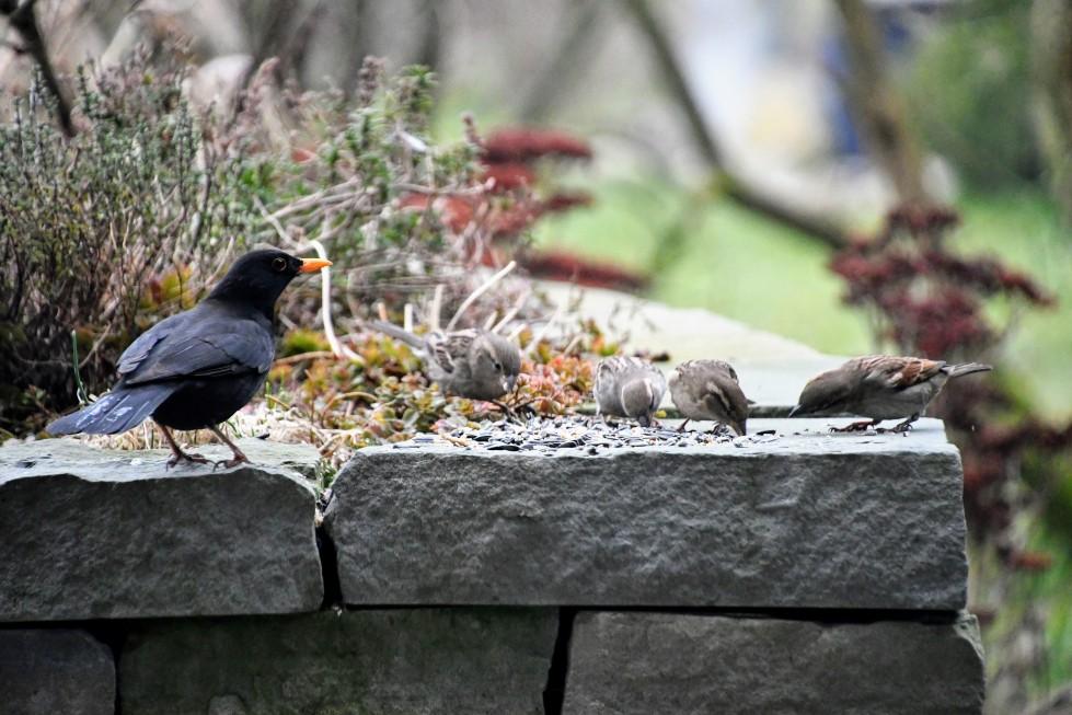 blackkbird-26.01-7