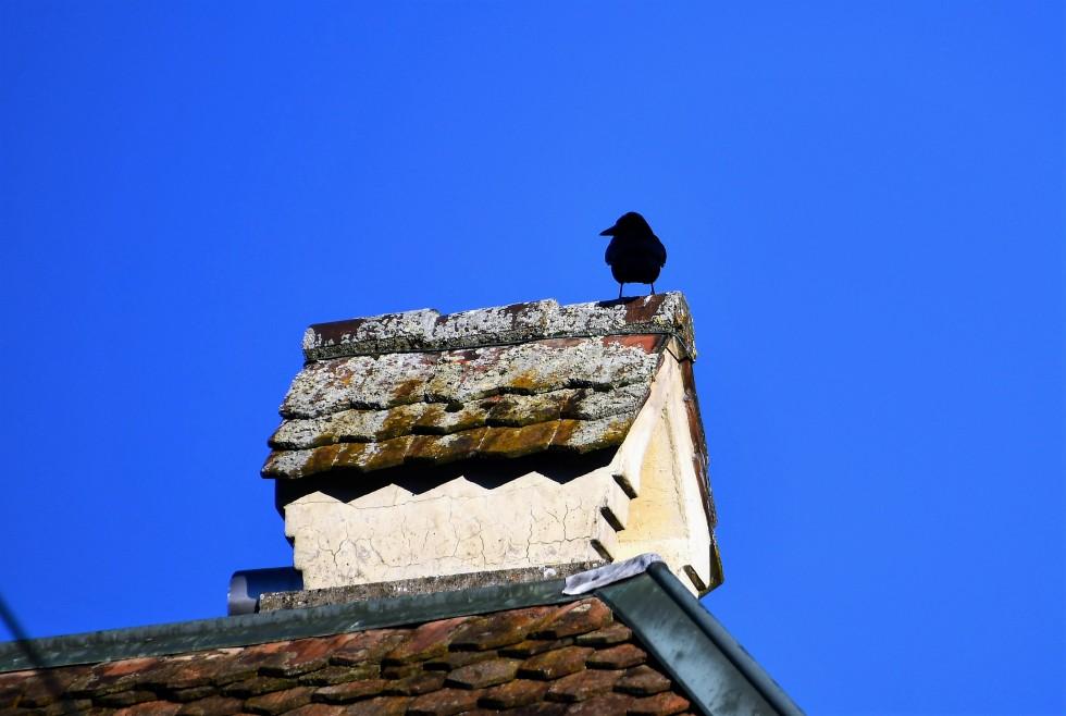crow-05.01.20290