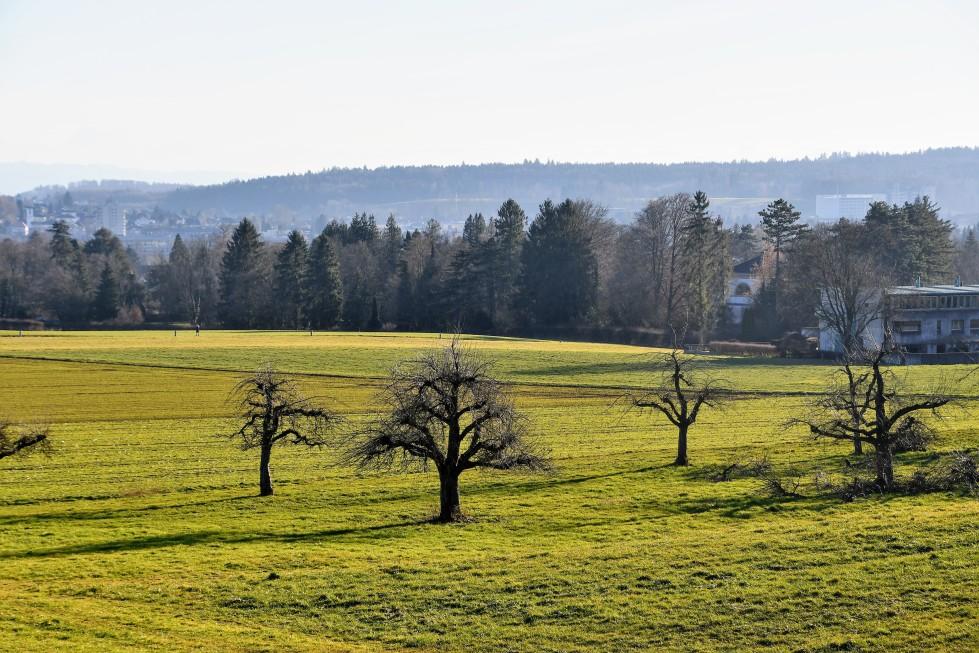 feldbrunnen-landscape-16.01.2020