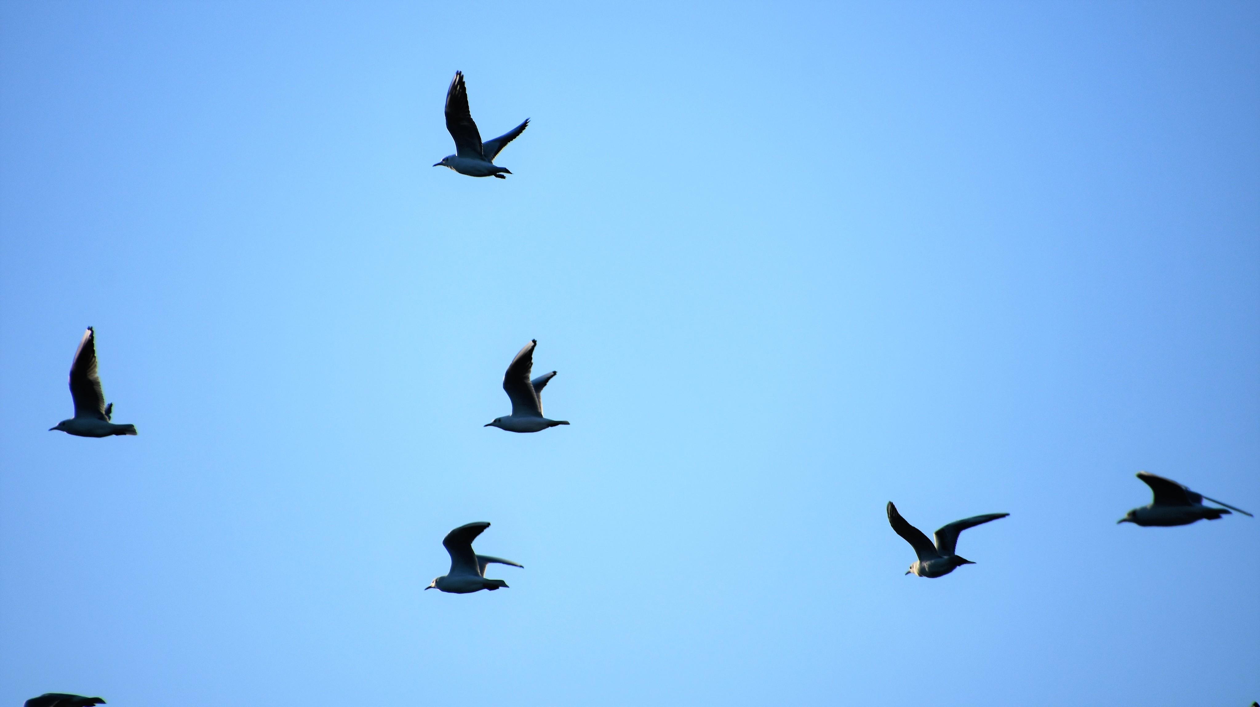 gulls-05.01-1