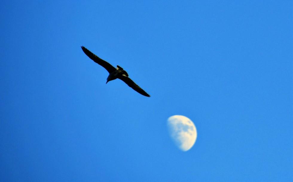 gulls-05.01-10