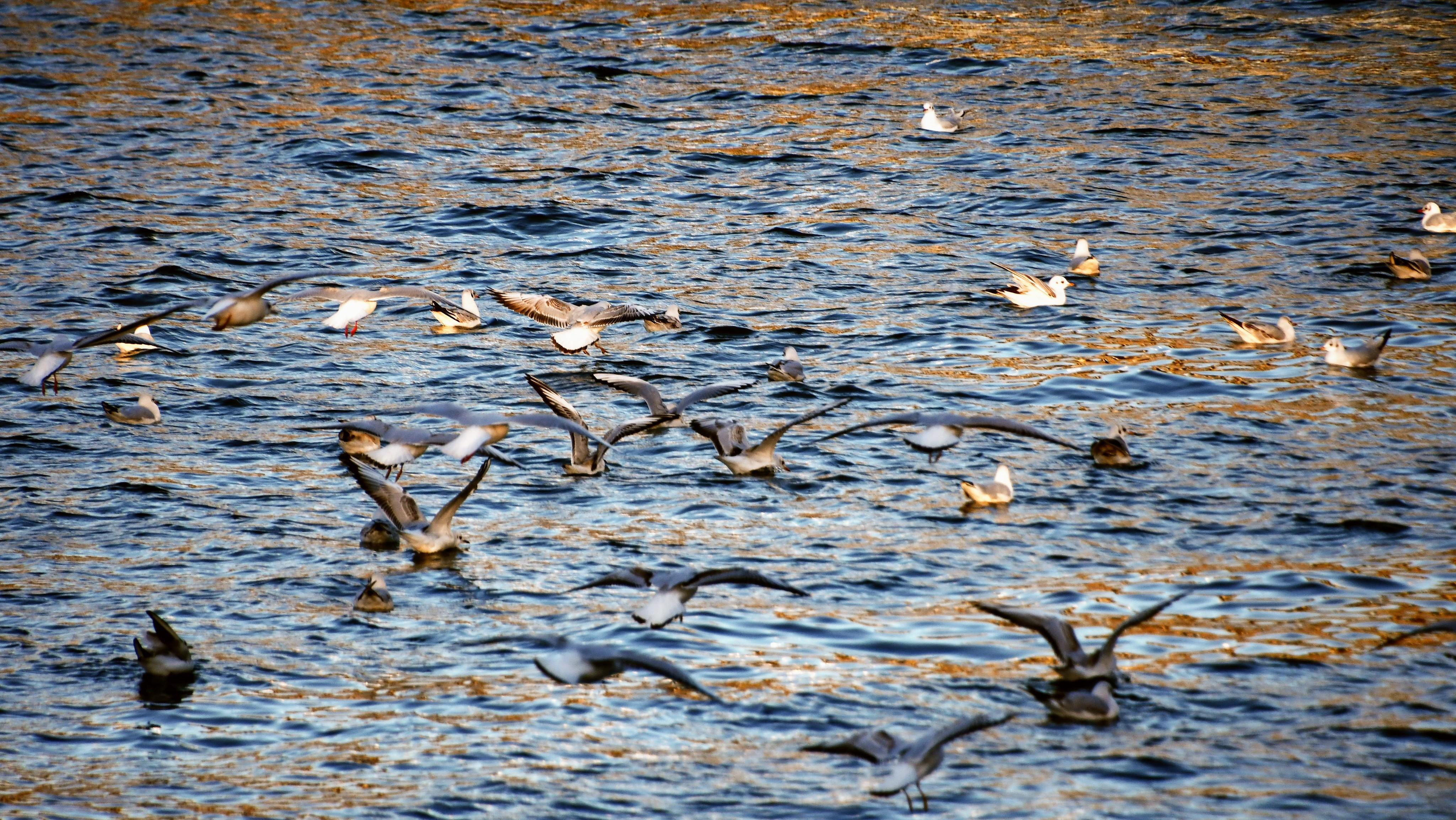 gulls-05.01-28