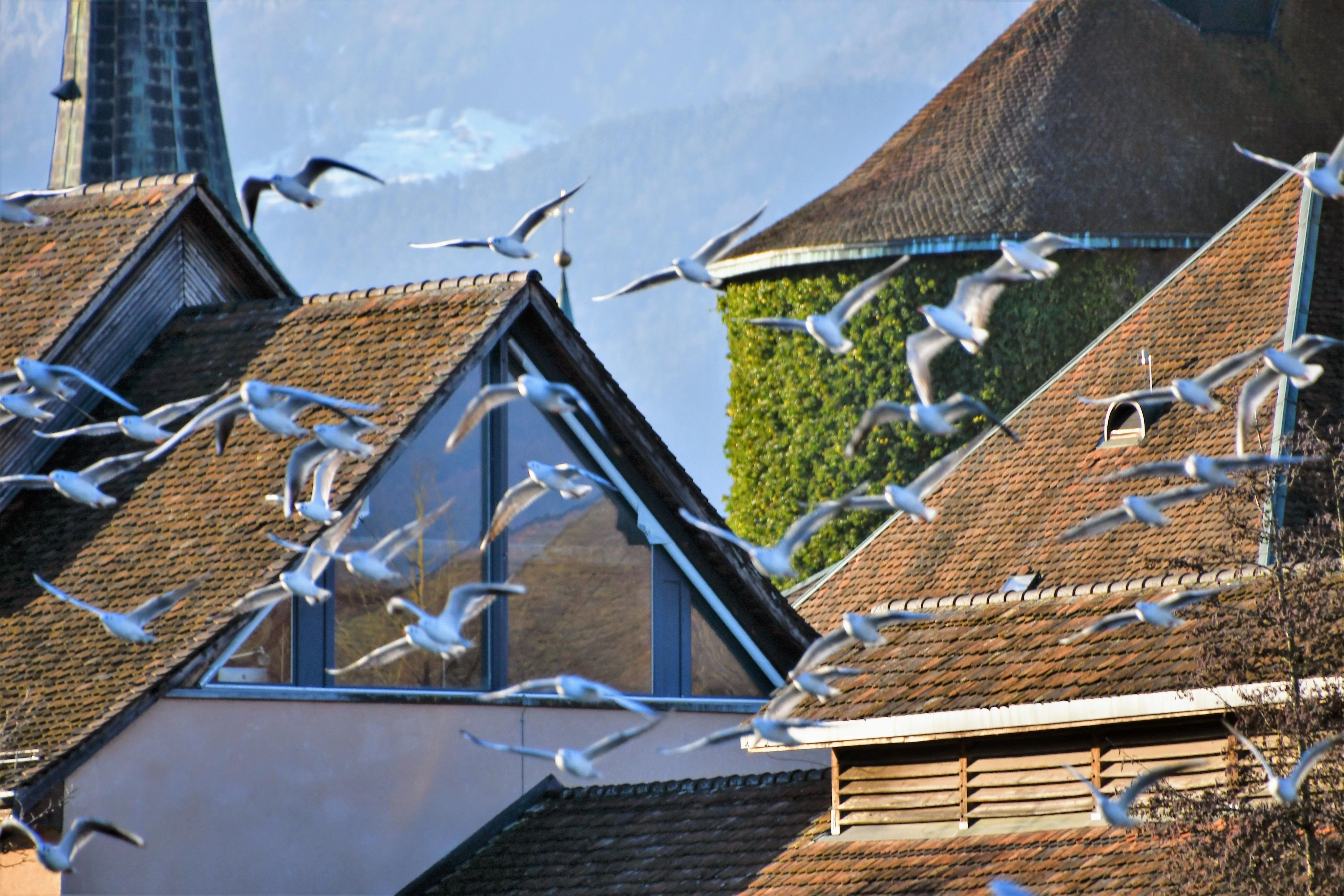 gulls-05.01-29