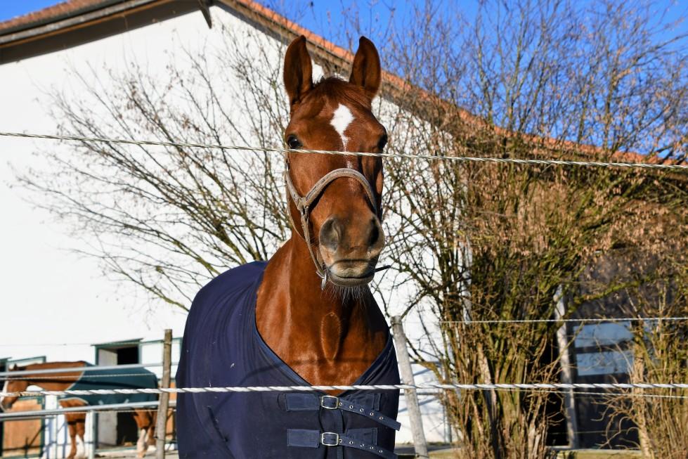horse-16.01-7