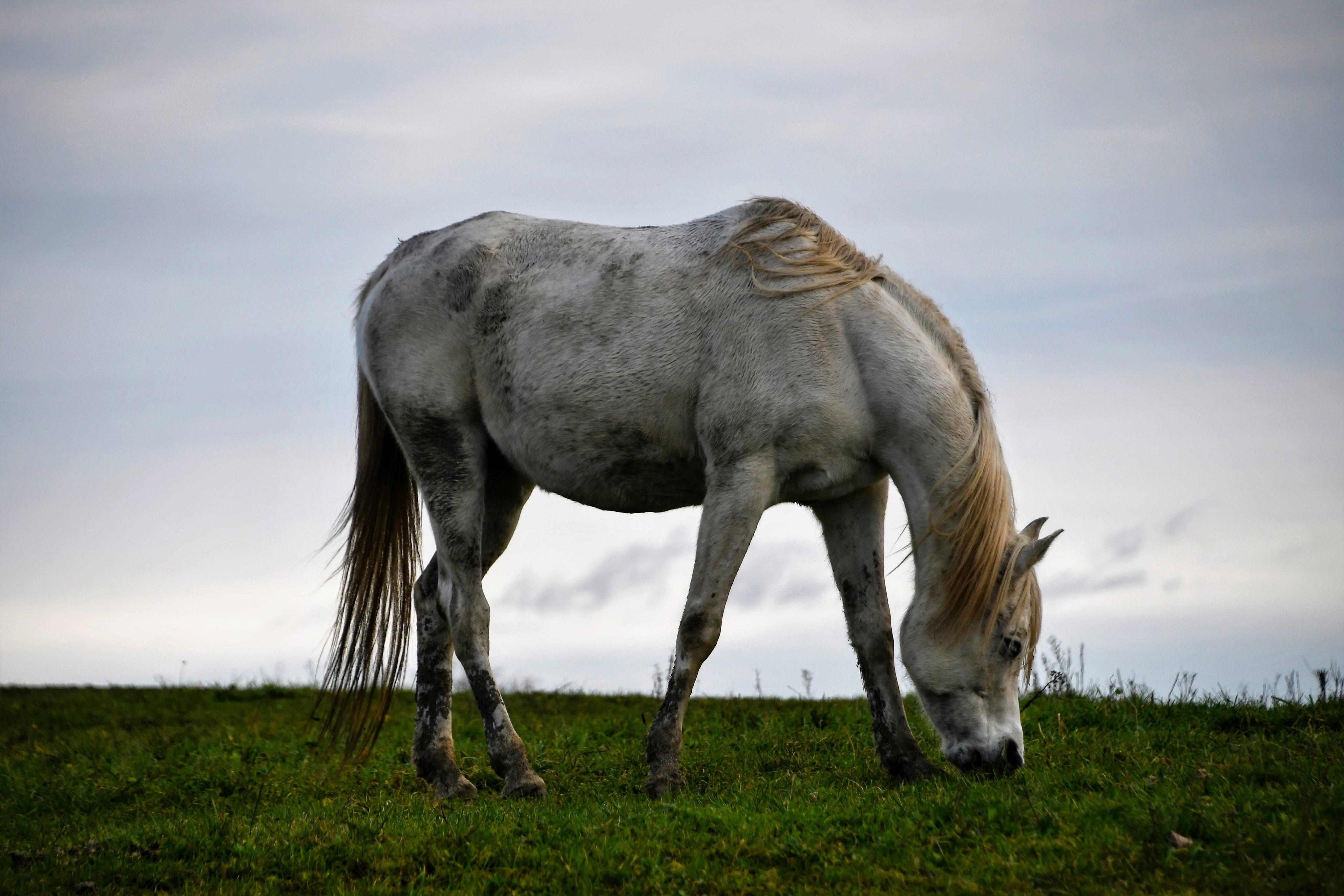 horses-04.01-5