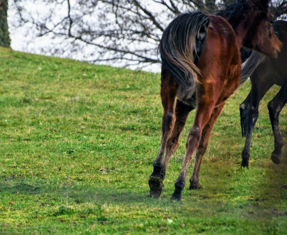 horses-04.01-6