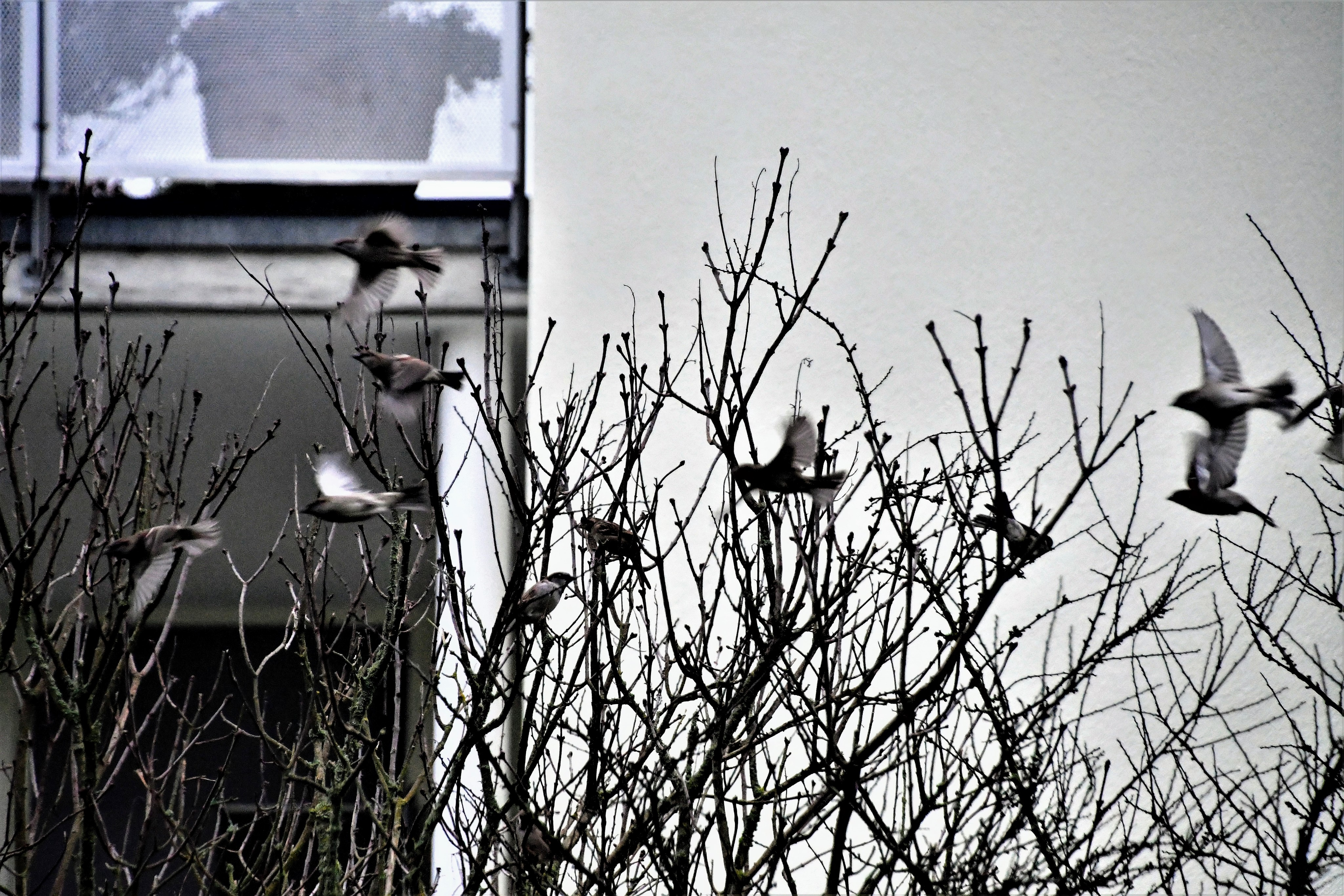 sparrows-02.01-1