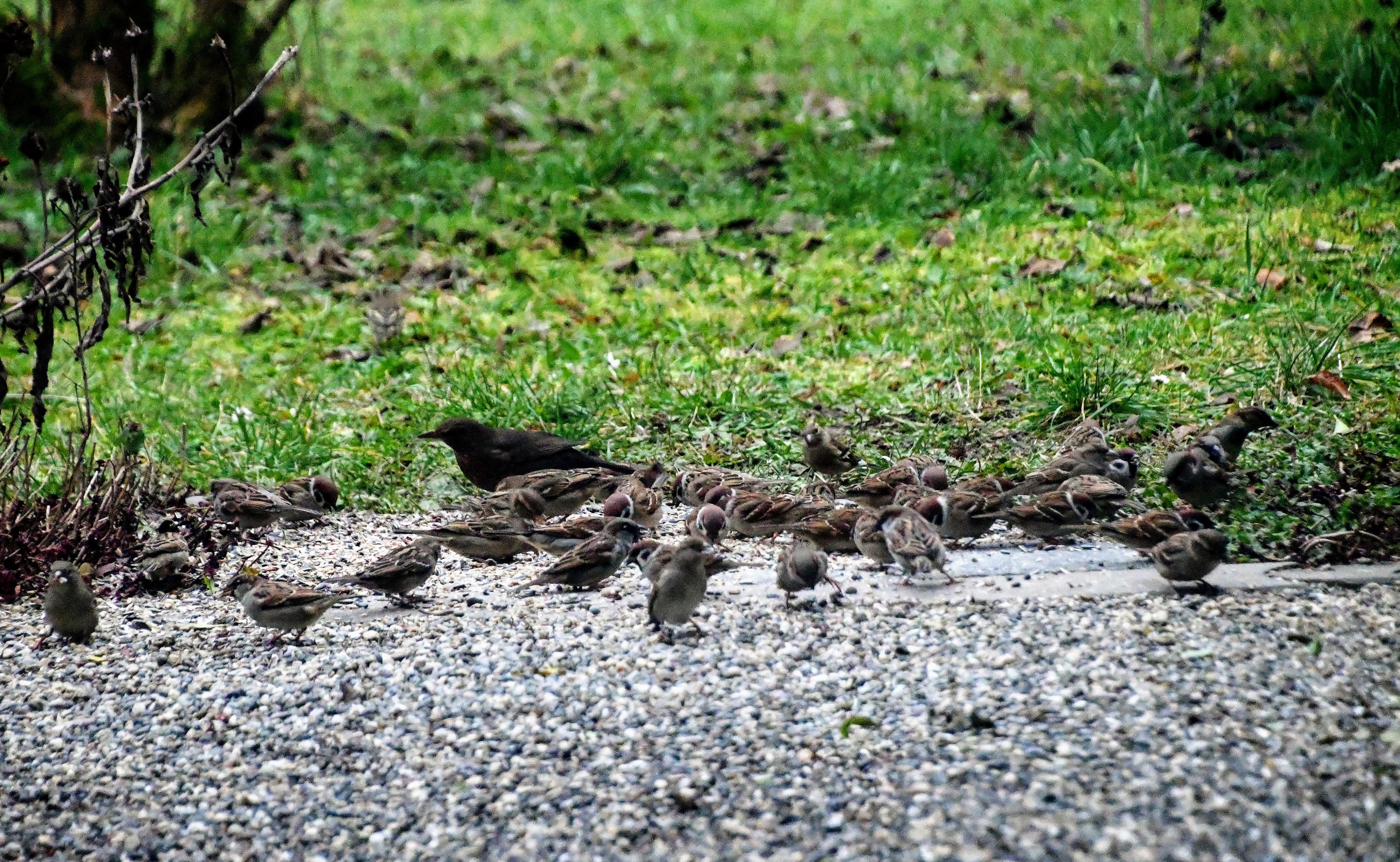 sparrows-02.01-3