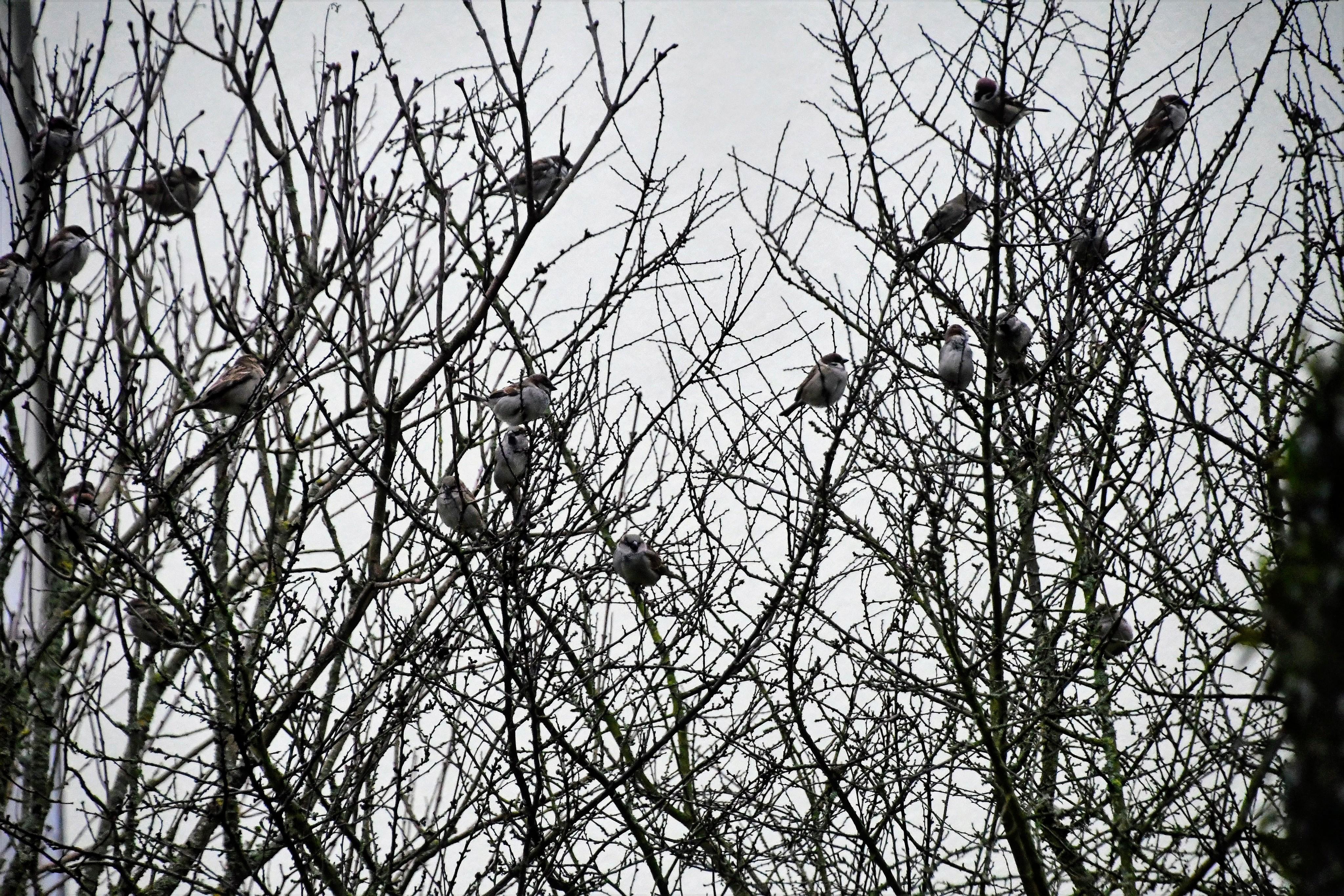 sparrows-02.01-7