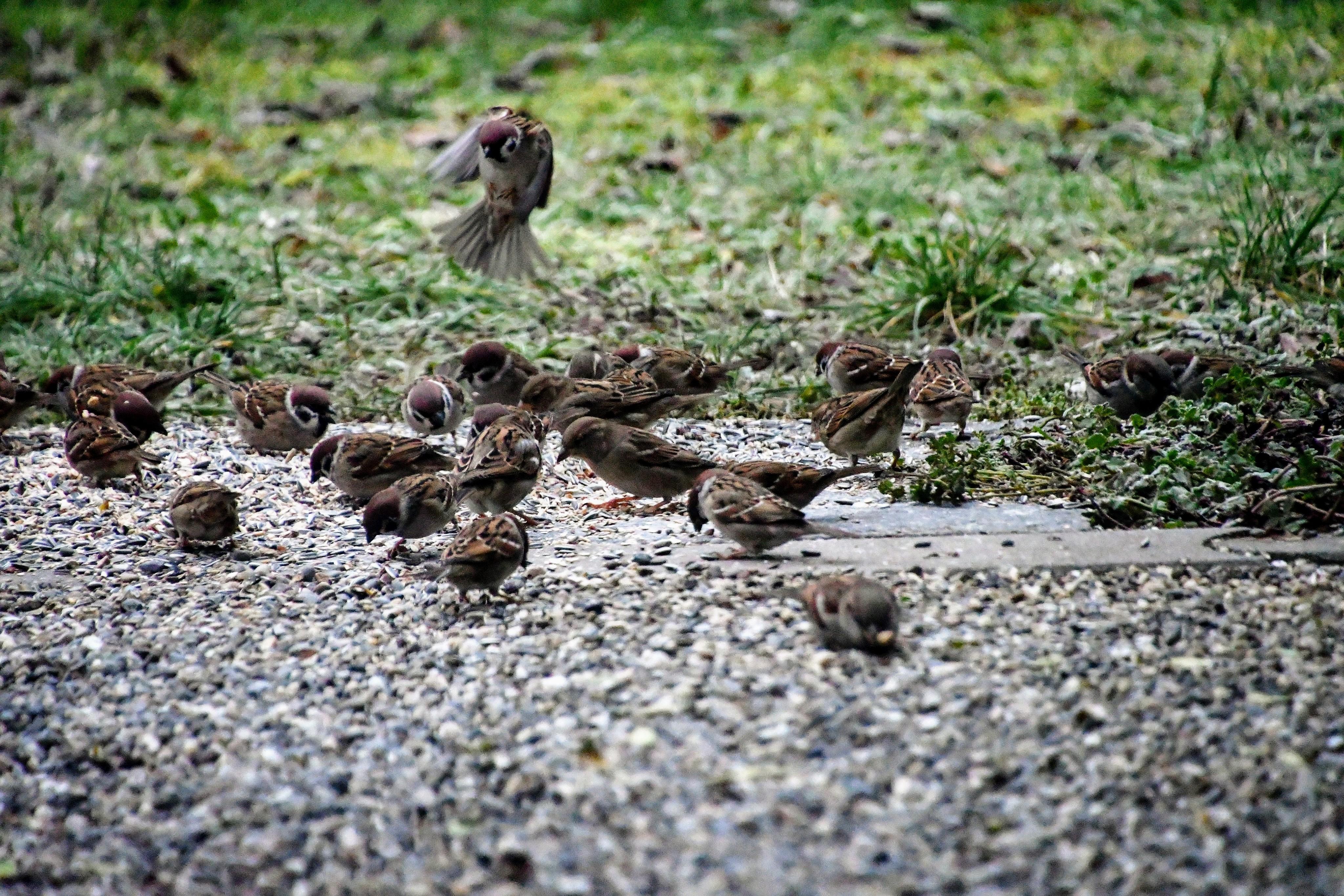 sparrows-06.01-1