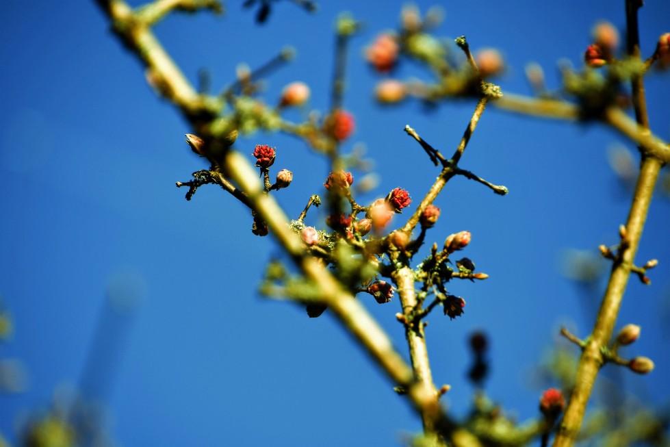 trees-16.01-2