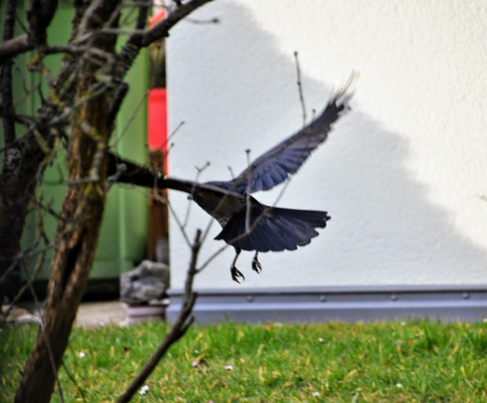 crow-25.02-1