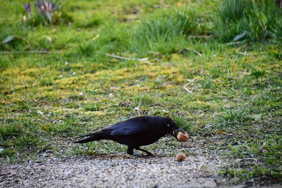 crow-28.02.2020