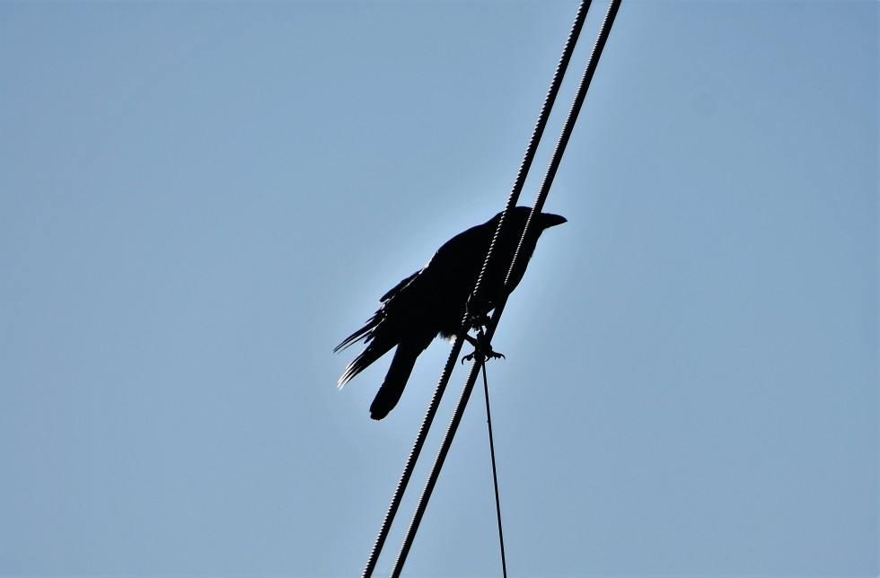crows-06.02-3