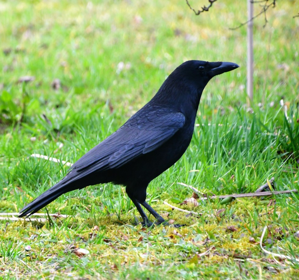 crows-21.02-5