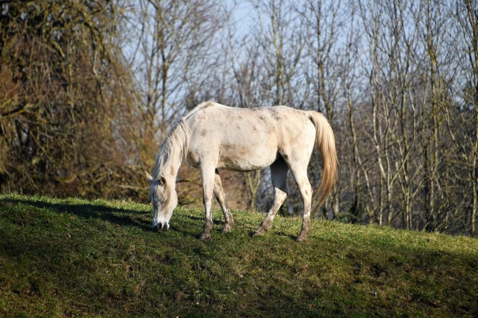 horses-08.02-1-1
