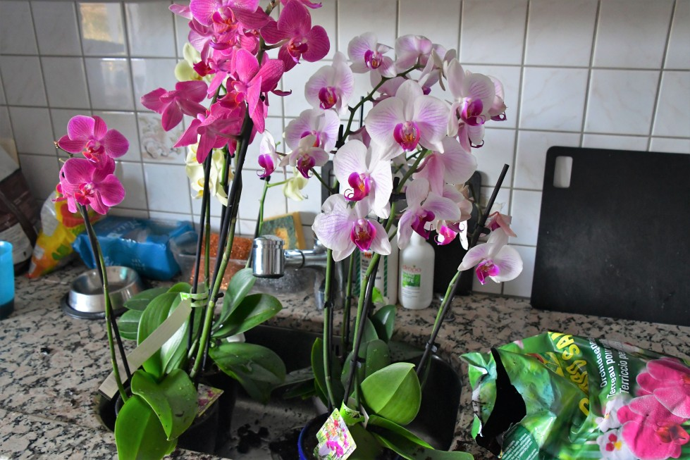 orchids-15.02.20209