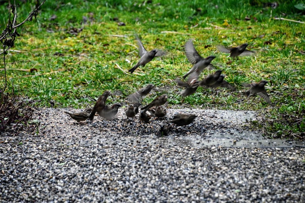 sparrows-03.02-3