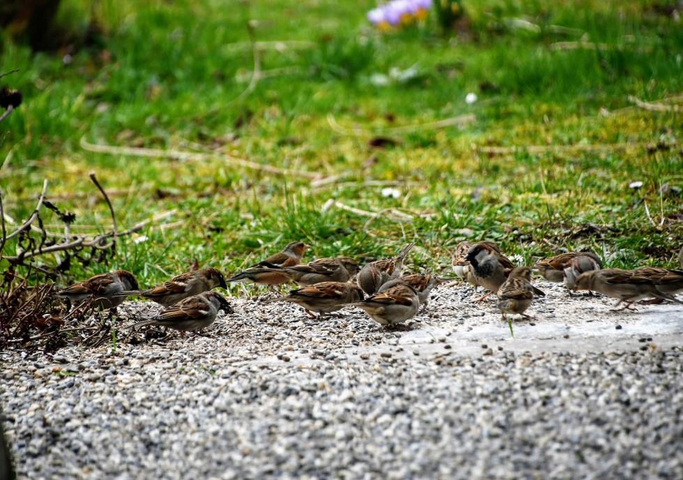 sparrows-09.02-3