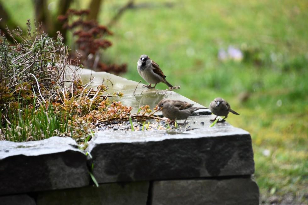 sparrows-11.02-11
