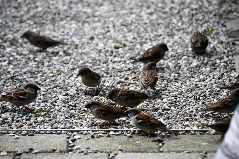 sparrows-11.02-2