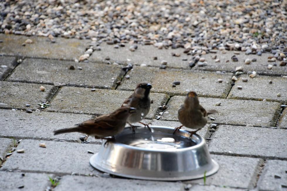 sparrows-18.02-3-1