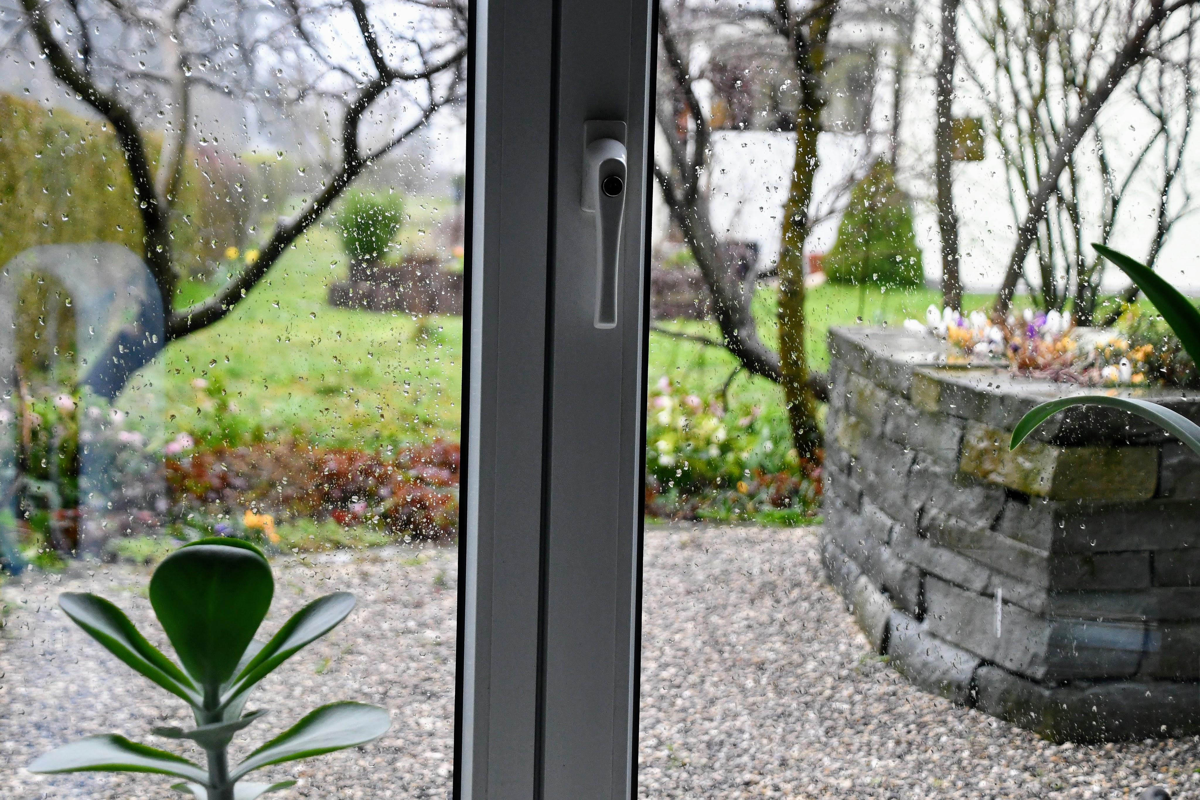a-rainy-day-in-garden-10.03.2020