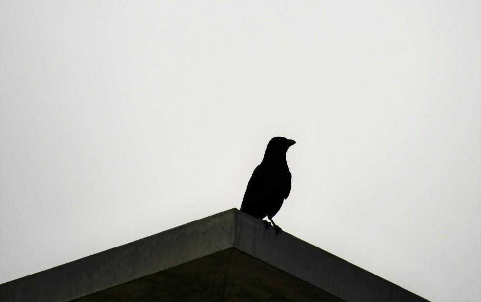 crow-29.02-4