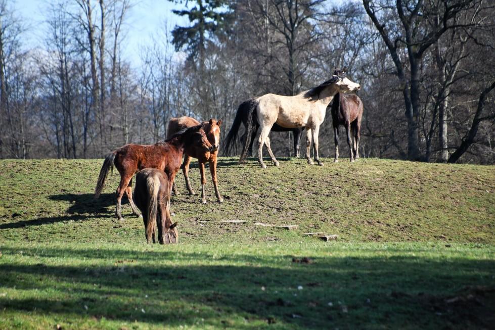 horses-01.03-1