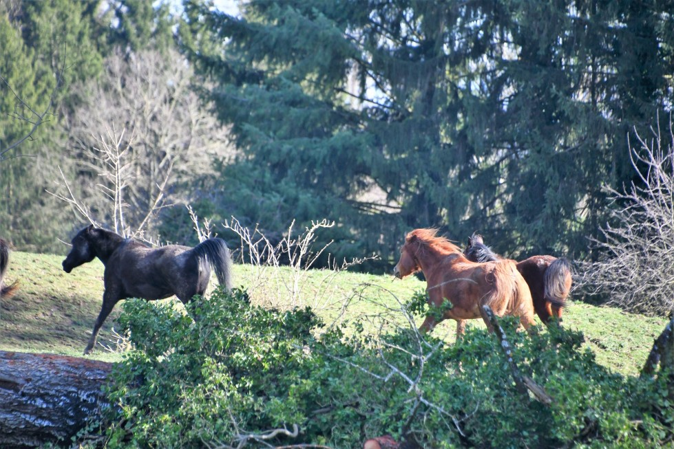 horses-01.03-3