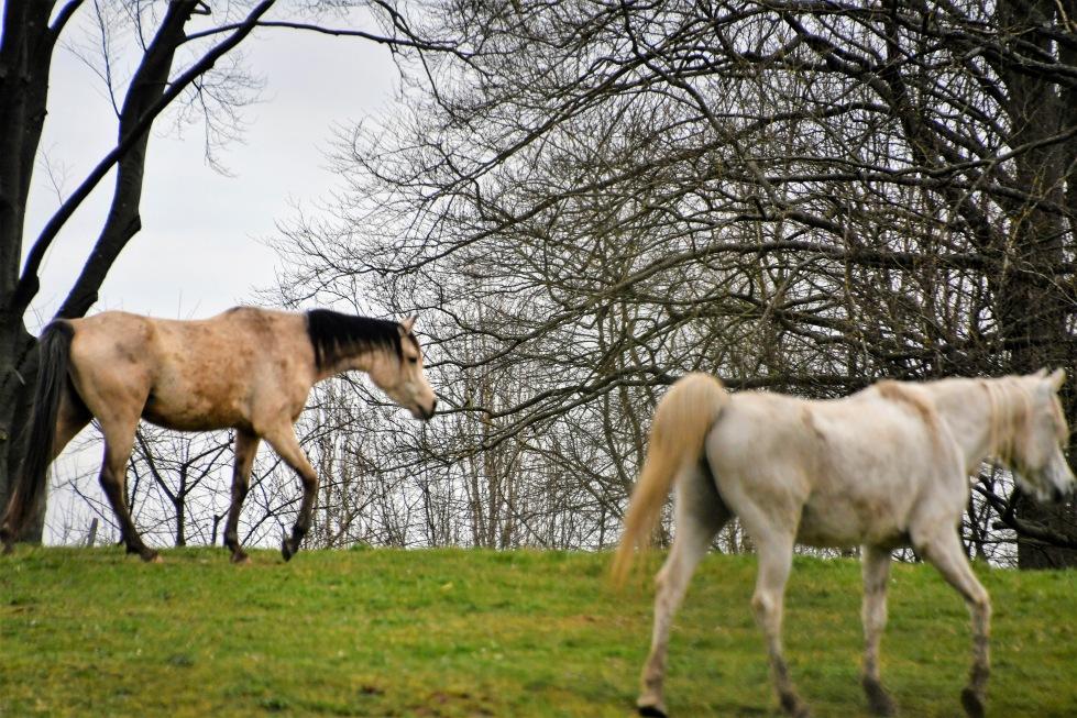 horses-u00a74.03-4