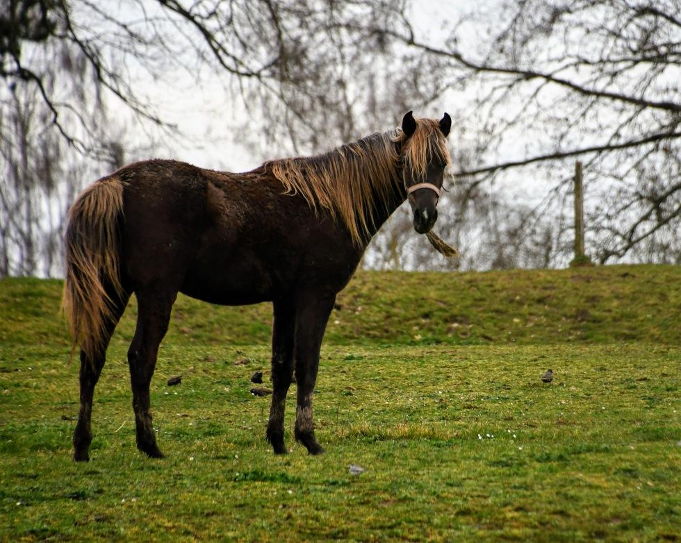 horses-u00a74.03-6