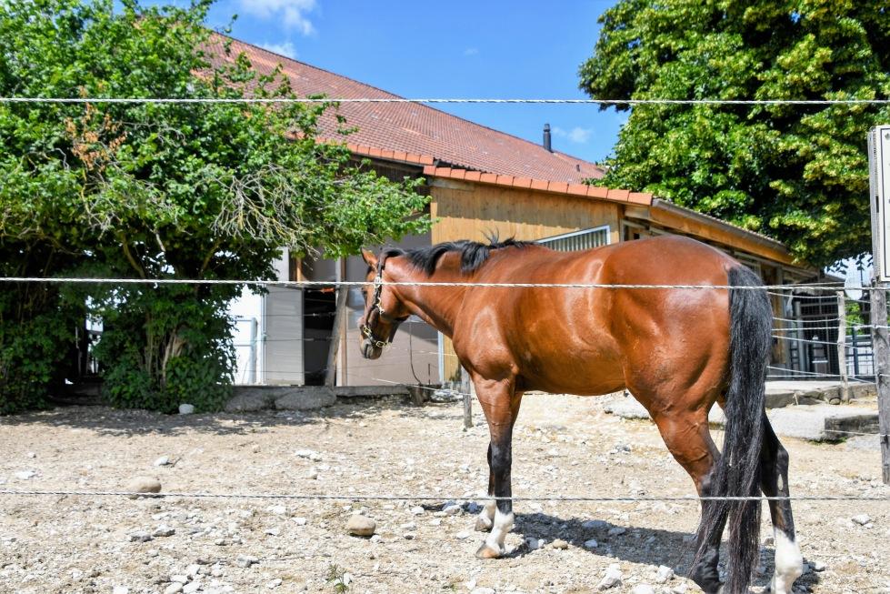horse-11.06-2
