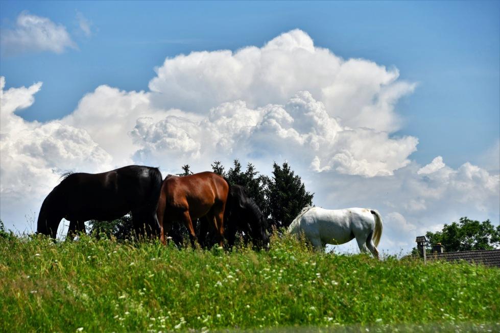 horses-27.06-1