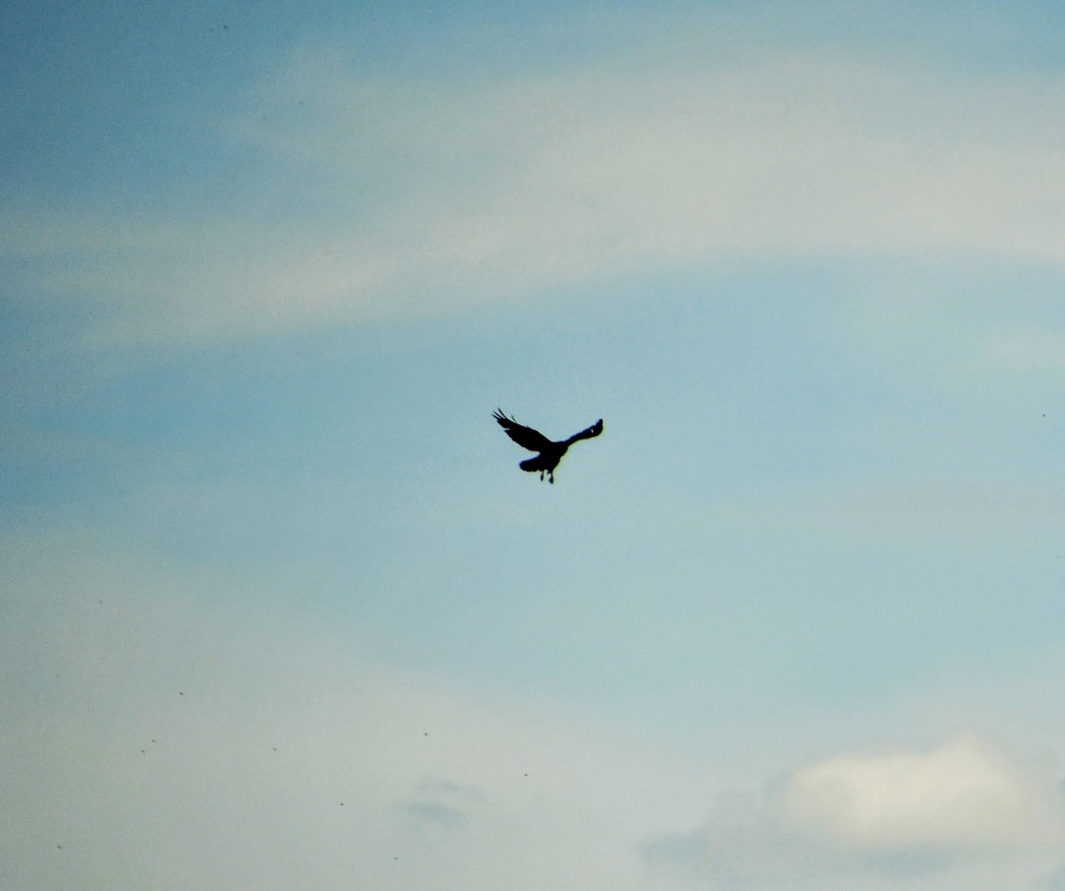 bird-in-flight-14.07-2