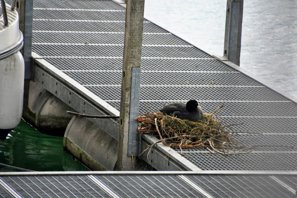 duck-16.07-2