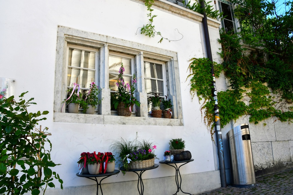 flower-shop-hauptgasse-30.06.20290