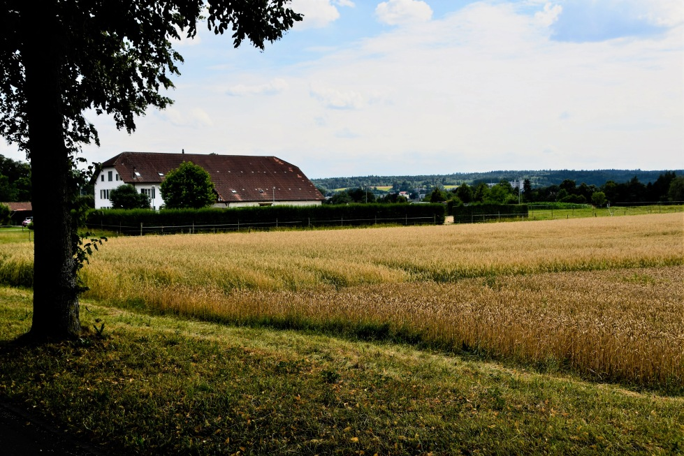 landscapes-around-waldegg-14.07.2020