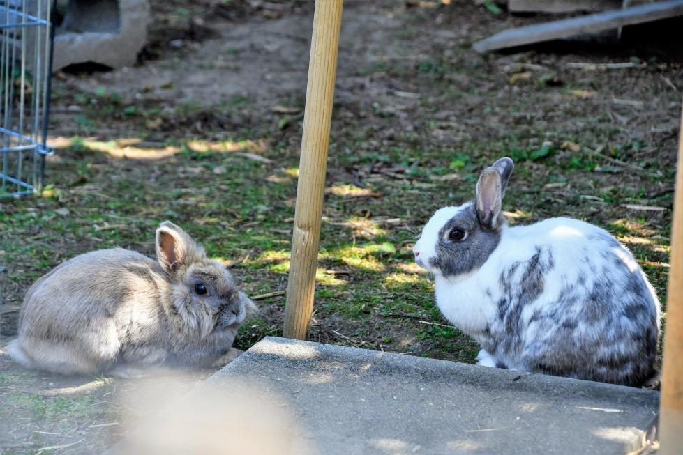 rabbits-25.07-1