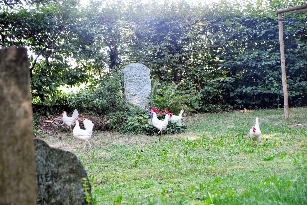 chickens-13.08-47